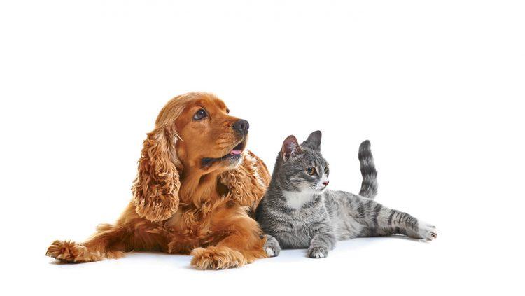 Evcil Hayvanlarımız da Teknolojinin Korumasında!