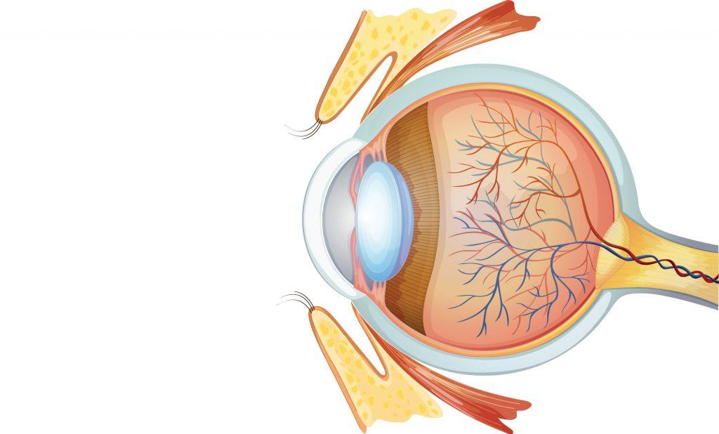 Replika İnsan Gözü